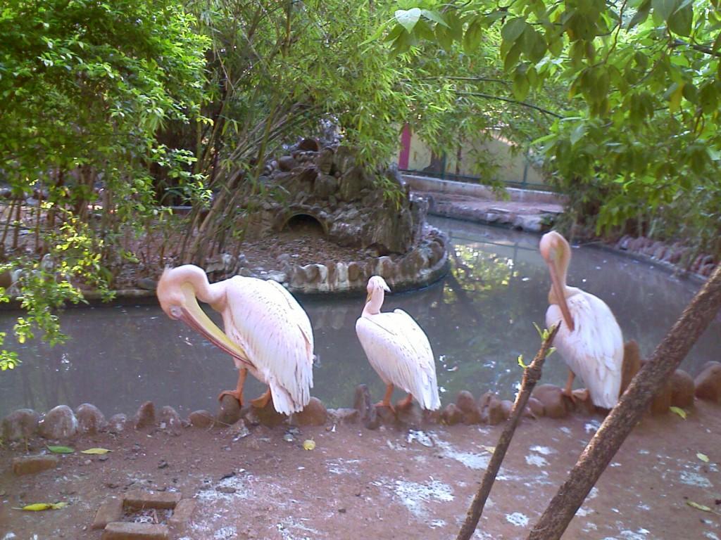 Coimbatore VOC Park Birds