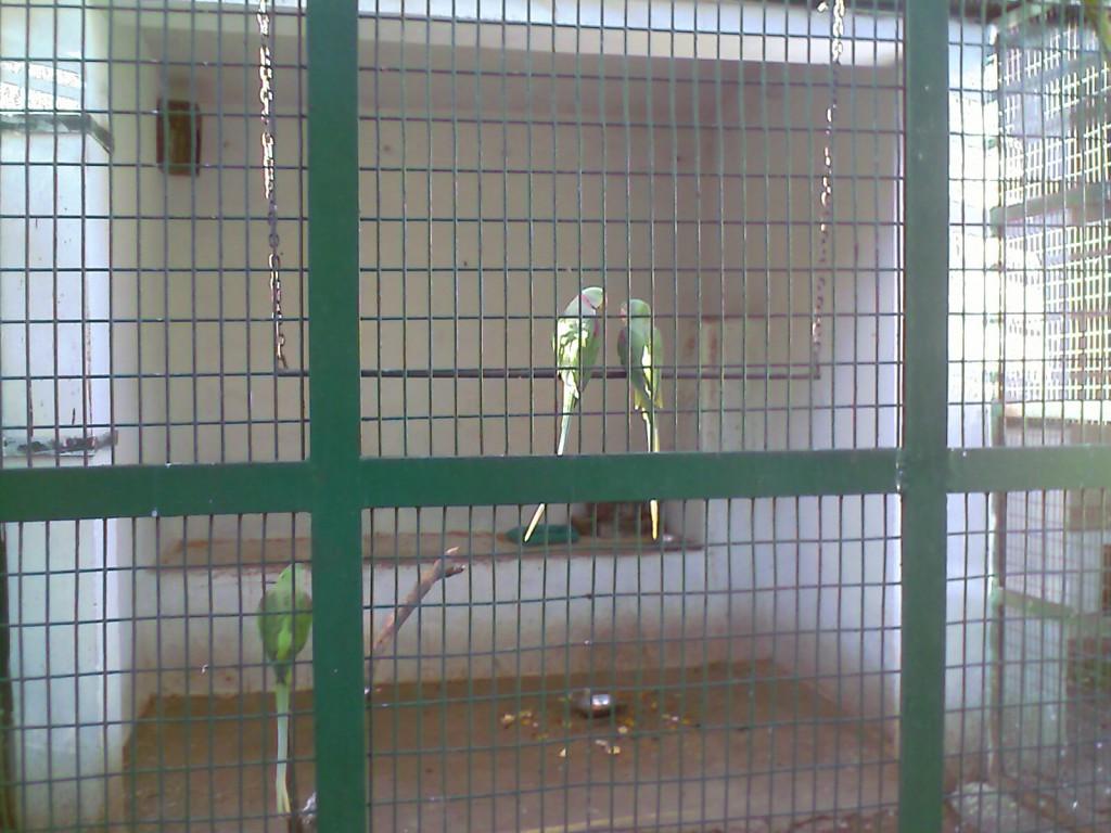 Parrots in VOC Zoo Coimbatore