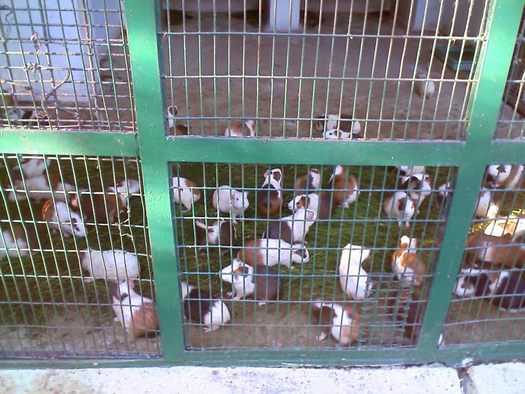 Rabbits in VOC Park Coimbatore