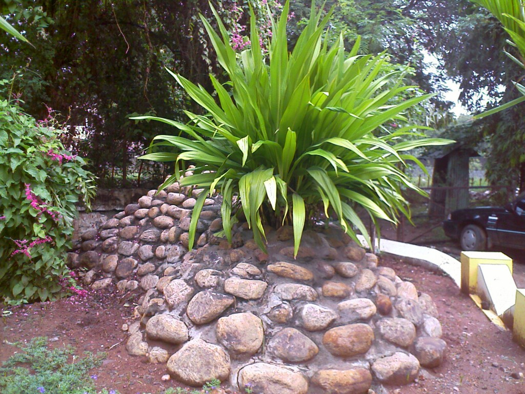 photo of a decorative plant in race course road coimbatore
