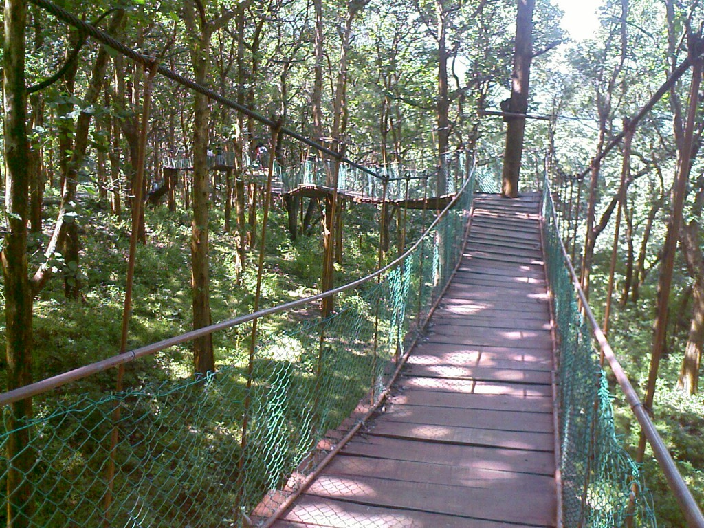 elevated pathway to kovai kutralam falls