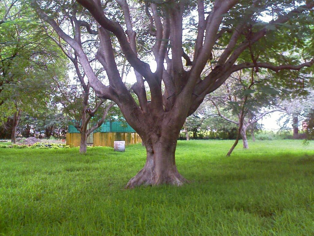 photo of nice tree in TNAU botanic gardens coimbatore
