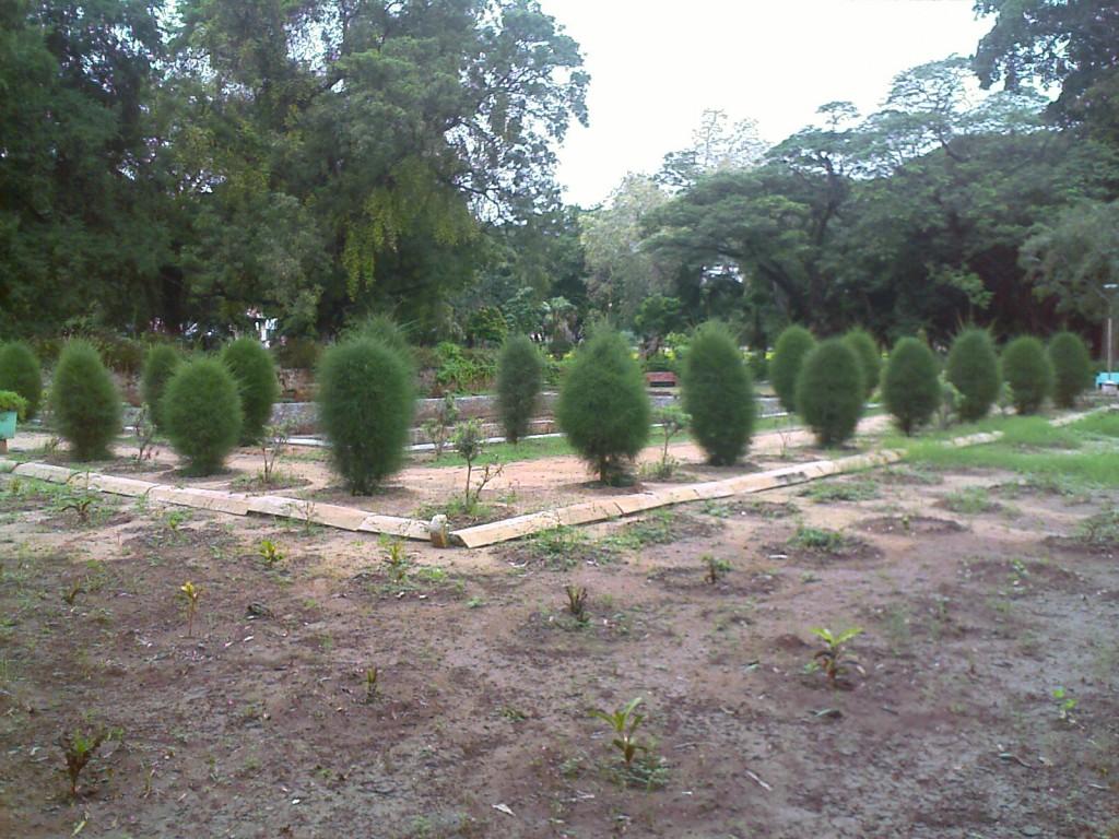 decorative shrubs in TNAU Botanic garden coimbatore