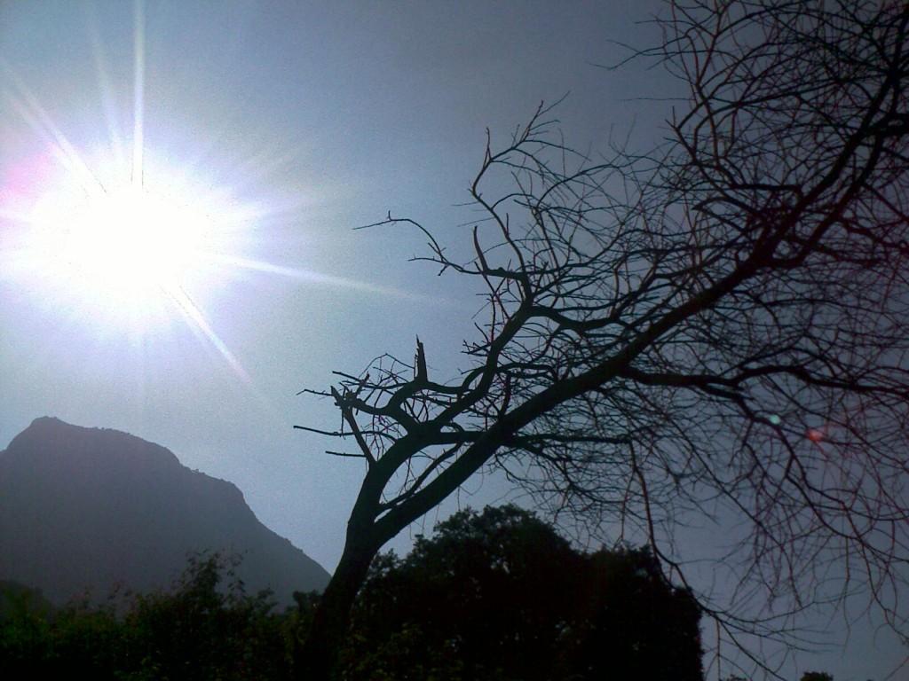 Tree without leaves near Palamalai, Coimbatore a small hill