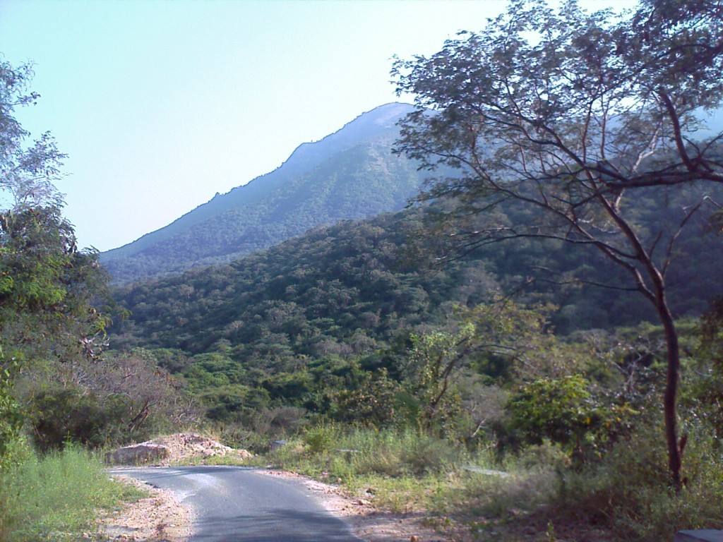 Palamalai Mountain Coimbatore - hill view