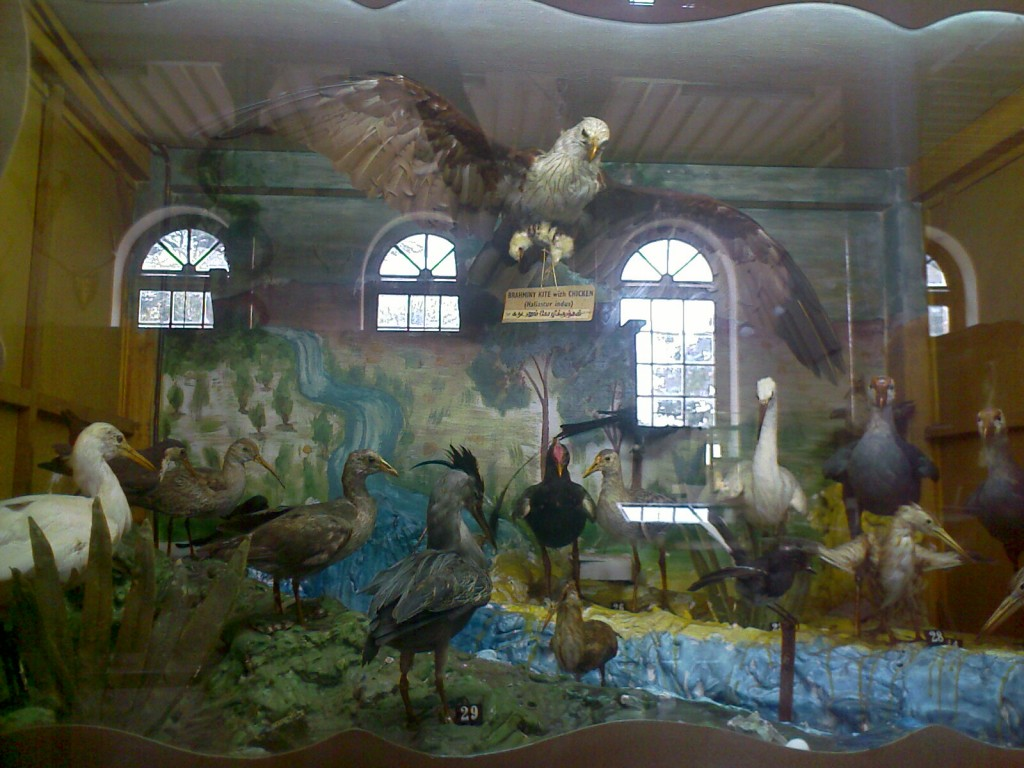 birds at forest college museum coimbatore