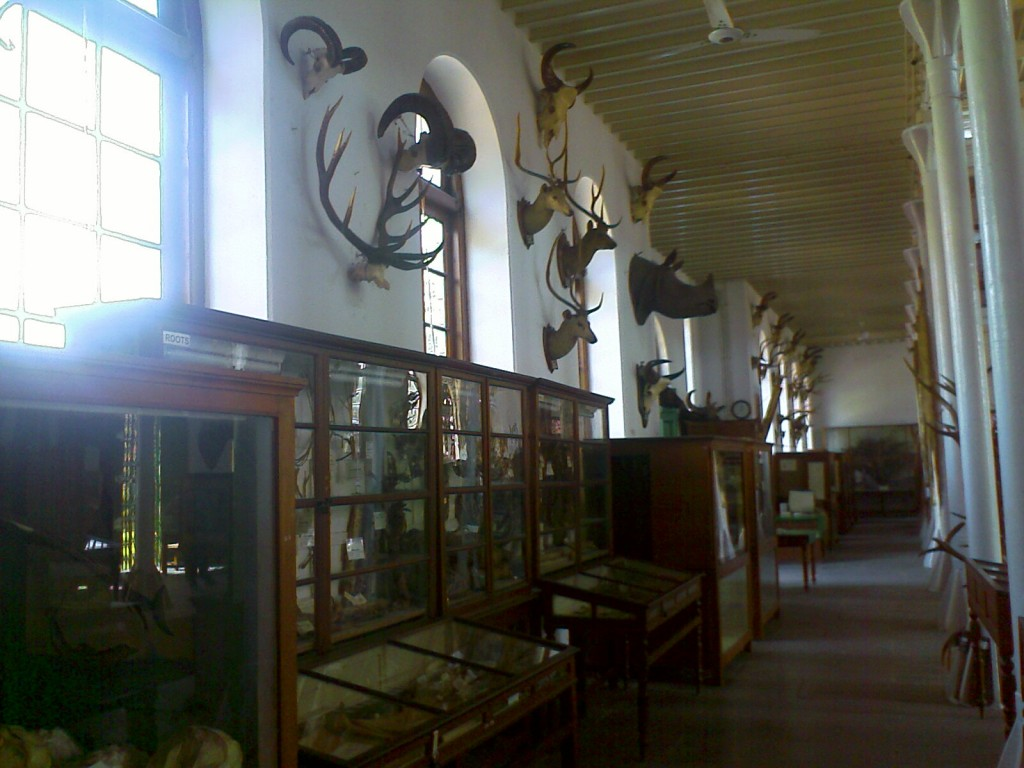 exhibits at the forest college museum coimbatore