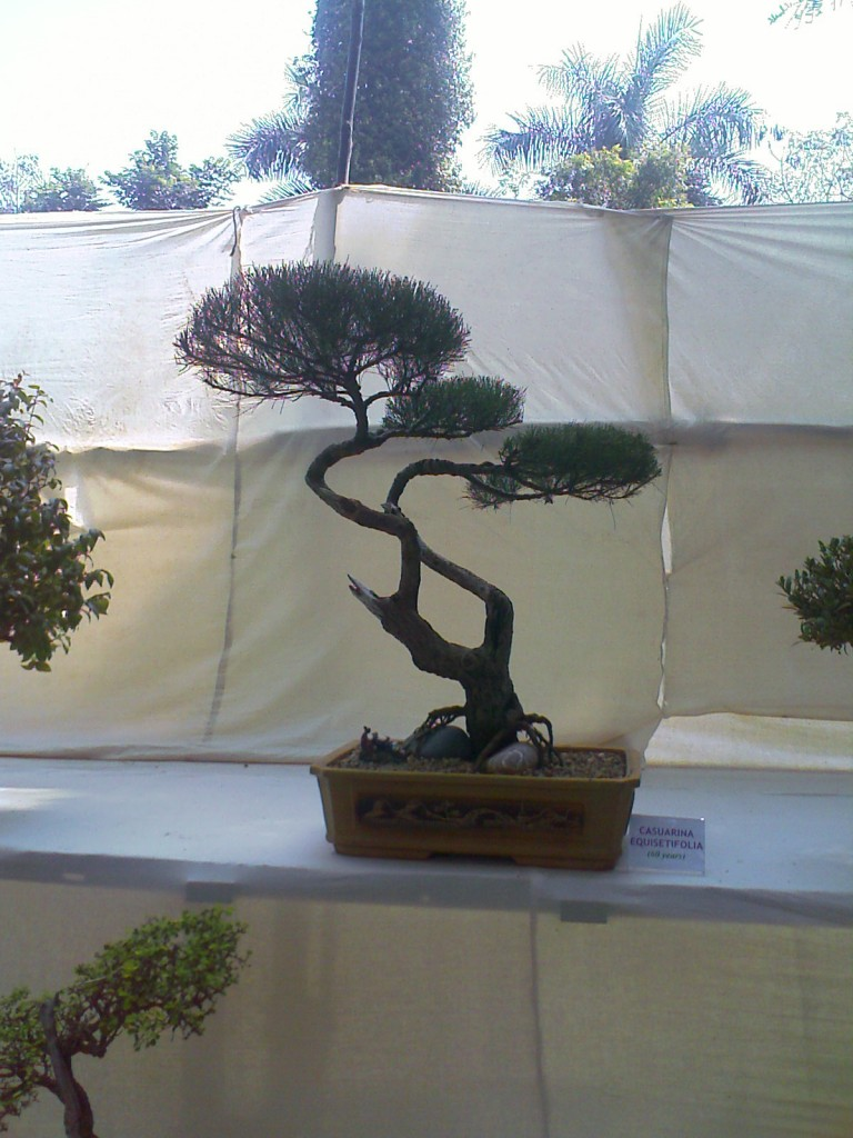 a miniature tree kept at covai flower show