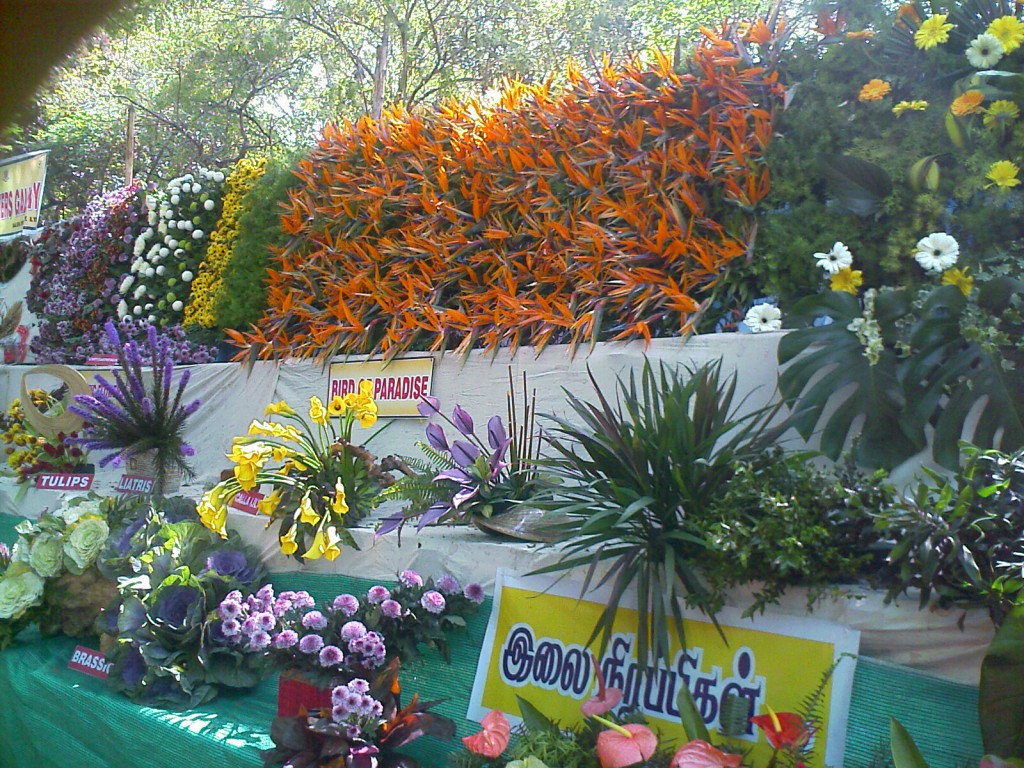 coimbatore 2011 flower show arrangement