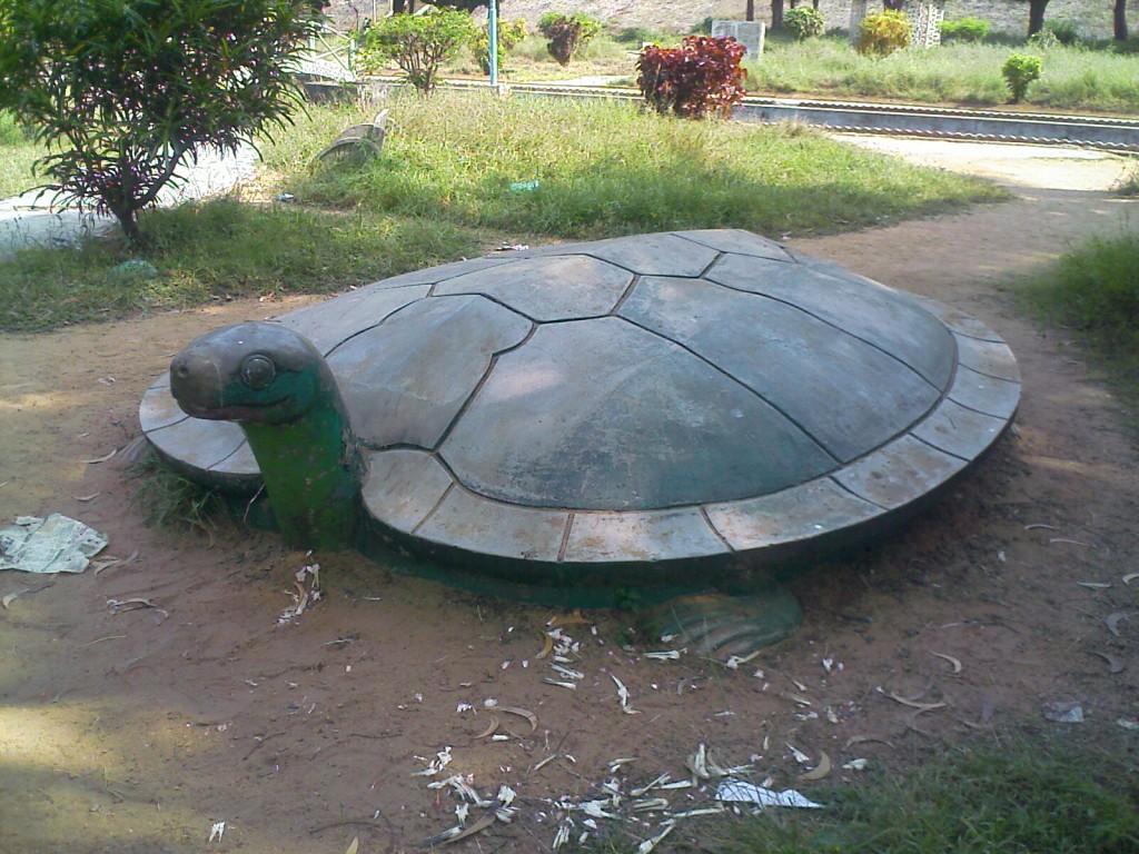 tortoise in aliyar dam/ park