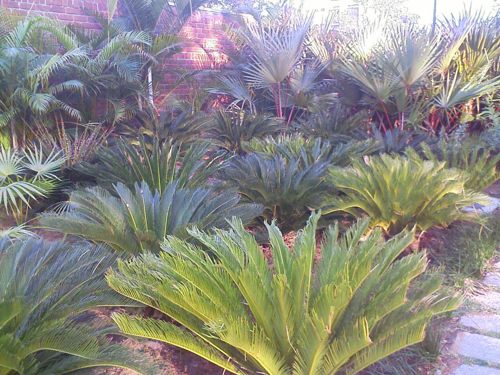 semmozhi poonga plants