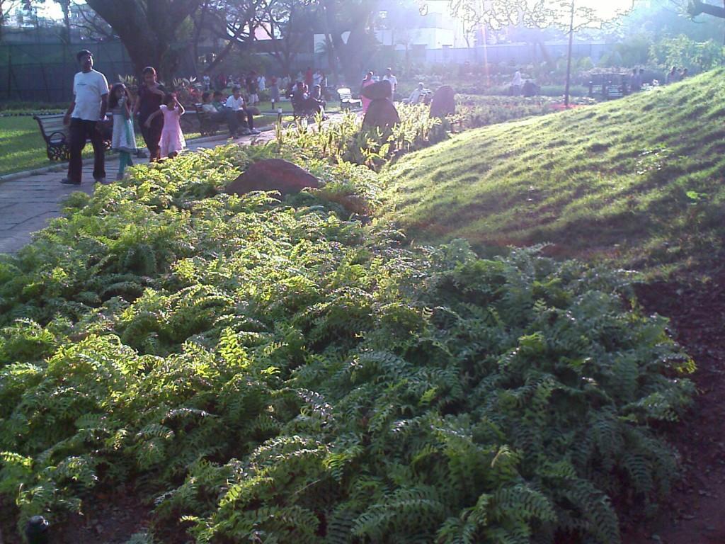 semmozhi poonga grass