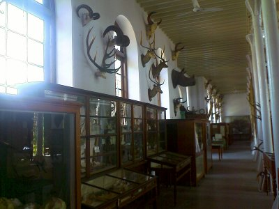H A Gass Forest Museum in Coimbatore